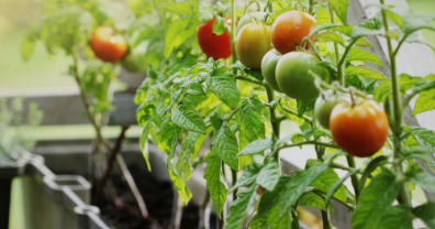 Tips for Growing a Vegetable Container Garden